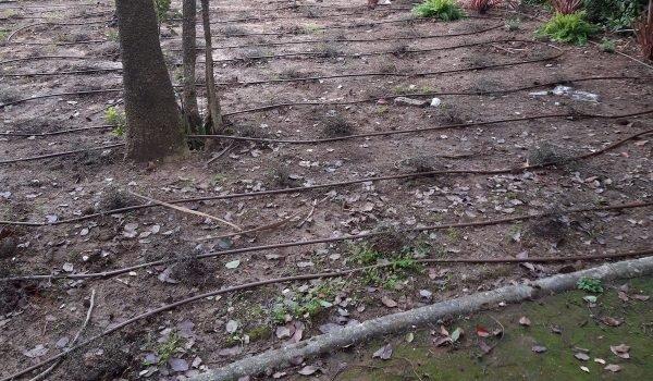 Paysagiste et entretien de jardin à Fréjus - Arrosage Automatique