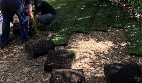 Paysagiste et entretien de jardin à Fréjus